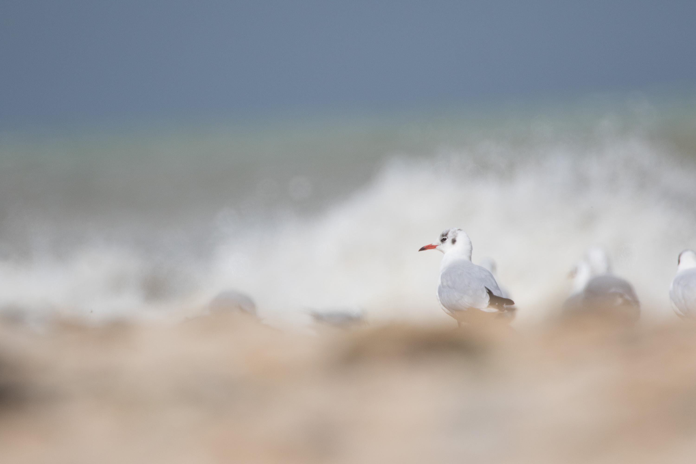 dieses Foto zeigt eine Möwe am Strand